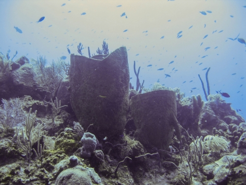barrel sponge fish coral reef grand cayman